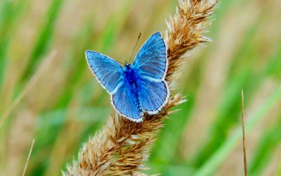 What We Can Learn About Transformation From Butterflies